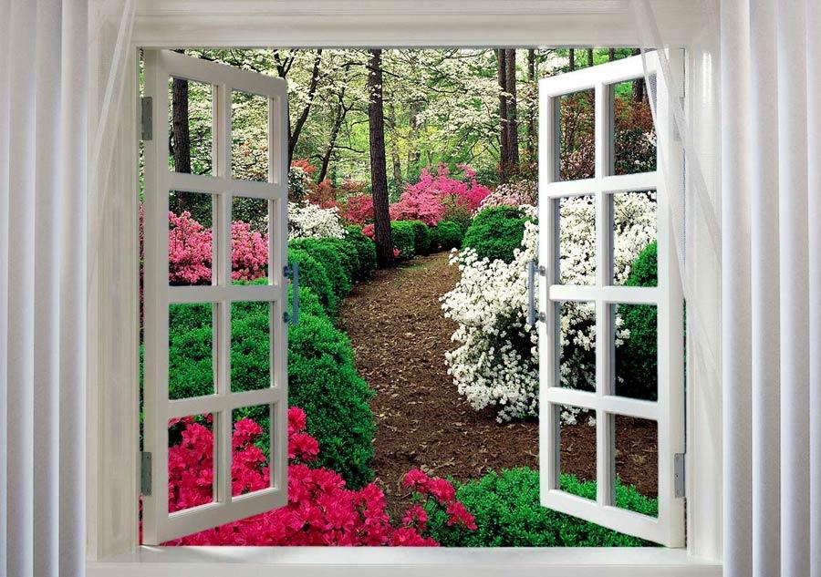 vid-iz-okna.jpg