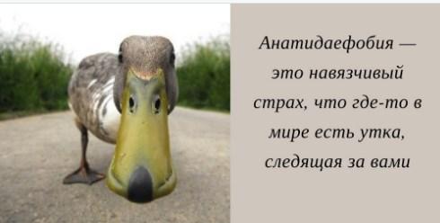 Screenshot_95.jpg