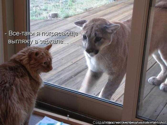 кот и лев.jpg