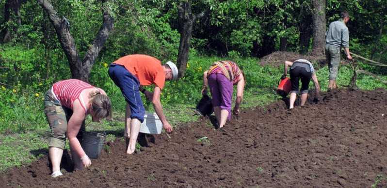 Фото как сажают картошку семьей на даче