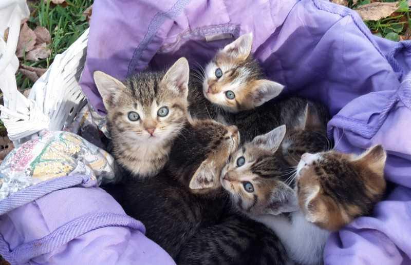 Фото отдаем маленьких подмосковных котяток в хорошие руки