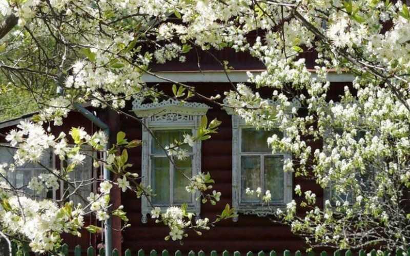 Фото как выглядит дом моей мечты - деревянный дом с вишневым садом на берегу реки